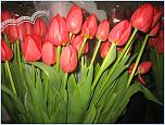 Нажмите на изображение для увеличения Название: весна 2013 037.jpg Просмотров: 0 Размер:212.5 Кб ID:396332
