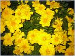 Нажмите на изображение для увеличения Название: весна 2013 160.jpg Просмотров: 0 Размер:1.10 Мб ID:396340
