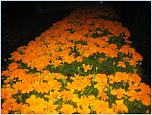 Нажмите на изображение для увеличения Название: весна 2013 164.jpg Просмотров: 0 Размер:969.8 Кб ID:396348