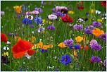 Нажмите на изображение для увеличения Название: красота природы1.jpg Просмотров: 0 Размер:48.7 Кб ID:511950